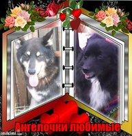 Ольга и Дружок аватар