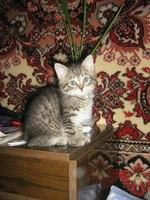 Алена Дмитрий и кот Бублик аватар